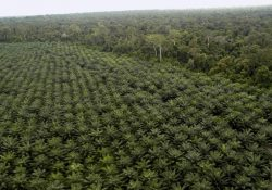 Palm Oil Plantation Business in Indonesia